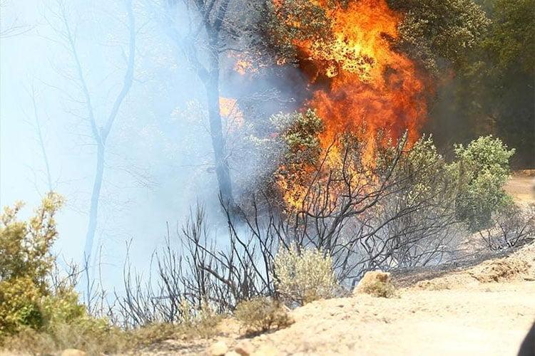 سونلغاز تكشف حصيلة خسائرها في حرائق ولاية تيزي وزو