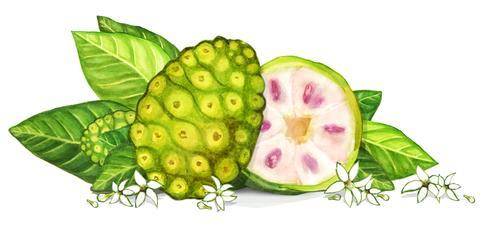 Noni_Fruit_RGB_Crop_large