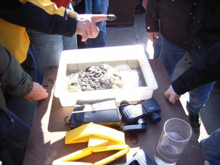 Schlick und Sedimente vom Chiemseegrund