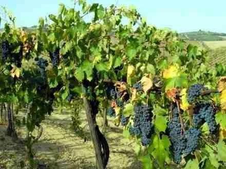 Vino rosso Naumachos