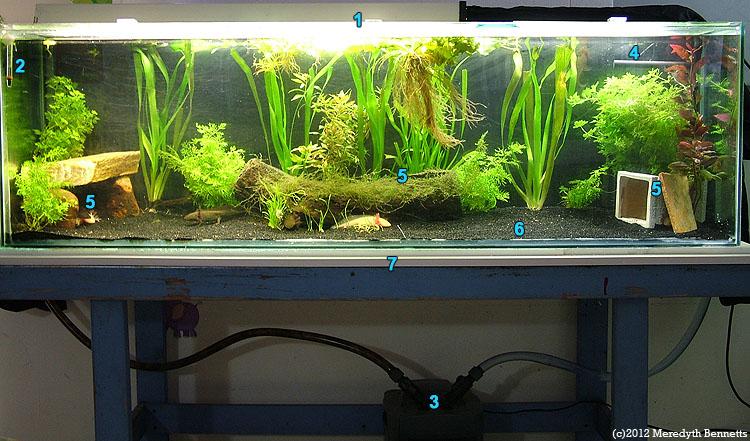 Advanced Axolotl aquarium tank