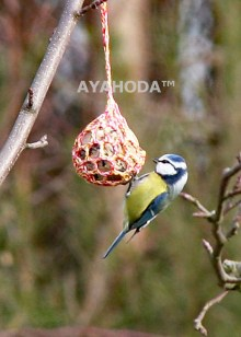 Ayahoda Small Wild Birds Help AYAHODA Bird Feeder