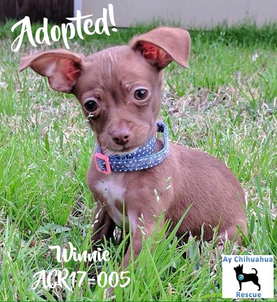 Winnie Adopted