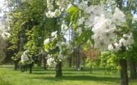 RadkaZimova_trees_inbloom_Stromovka