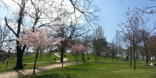 Sacre Coeur_park_trees_in_bloom_intro