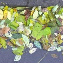 Prague-fall-photo-green-leaves-ontheground