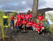 plantacion palmeras