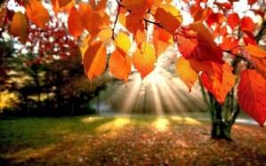 L'autunno, come prevenire l'insonnia, la malinconia e i dolori articolari