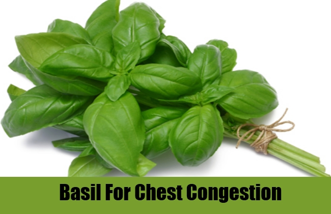 Basil For Chest Congestion