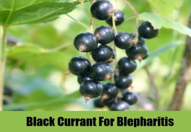 Black Currant For Blepharitis