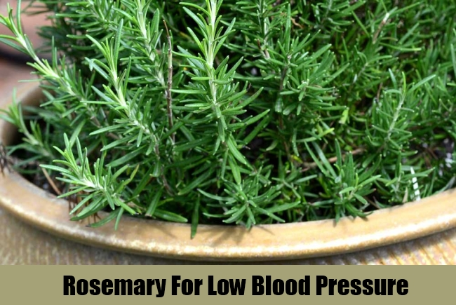 Rosemary For Low Blood Pressure