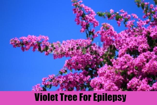Violet Tree For Epilepsy