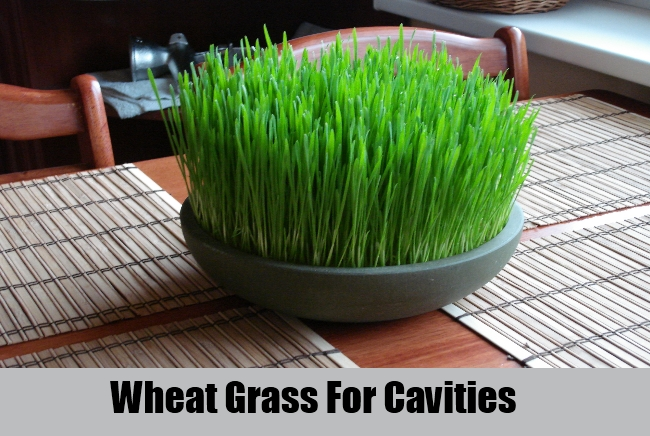 Wheat Grass For Cavities