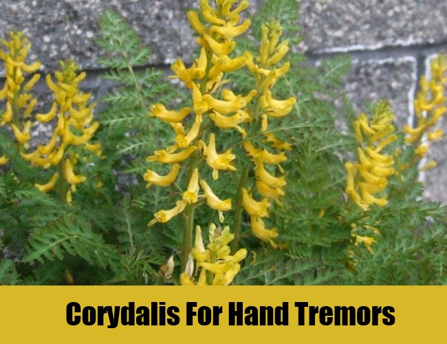Corydalis For Hand Tremors