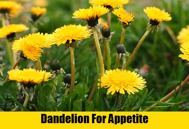 Dandelion For Appetite
