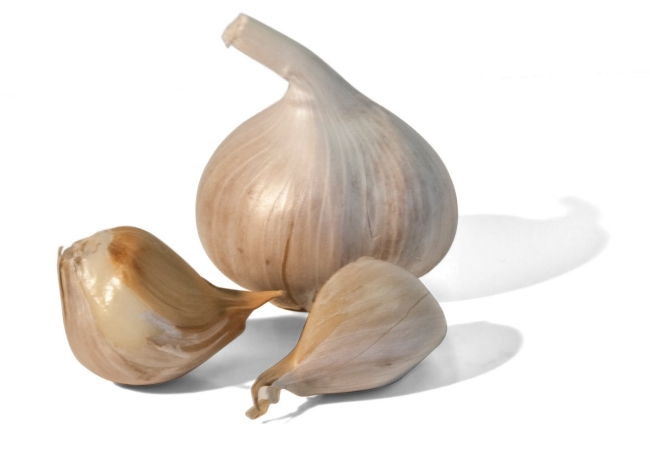 Garlic For Lyme Disease