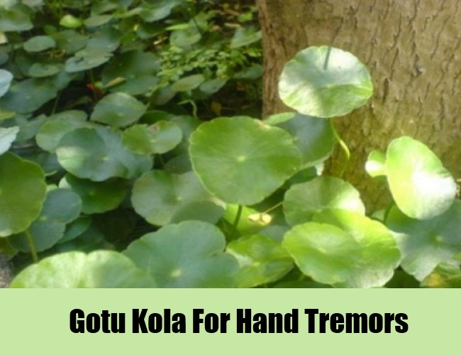 Gotu Kola For Hand Tremors