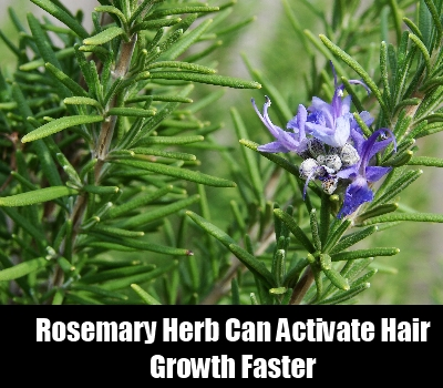 Rosemary Remedy