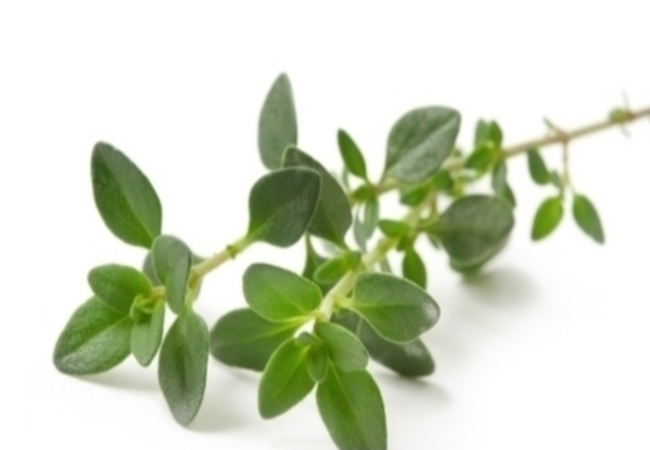Thyme For Cough