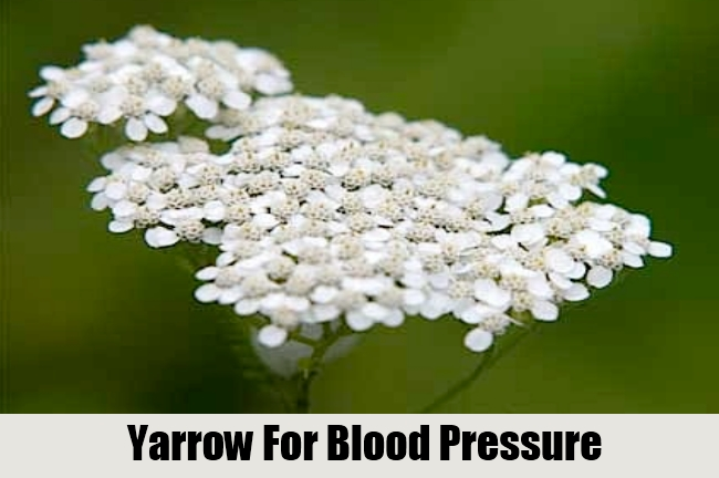 Yarrow For Blood Pressure
