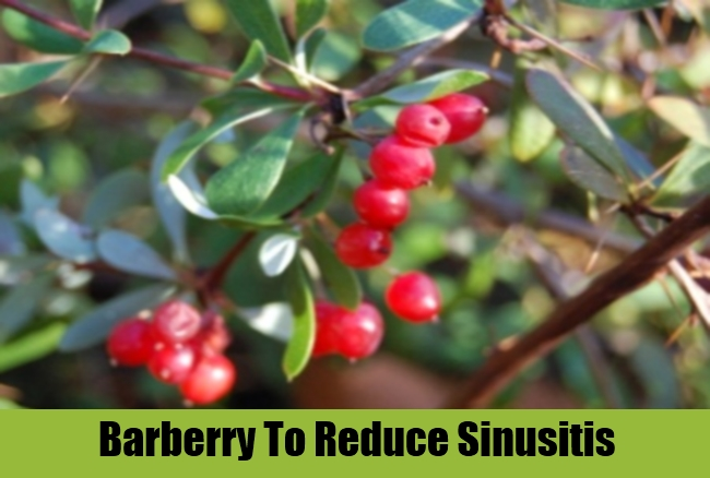 Barberry To Reduce Sinusitis