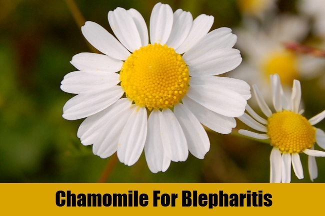 Chamomile For Blepharitis