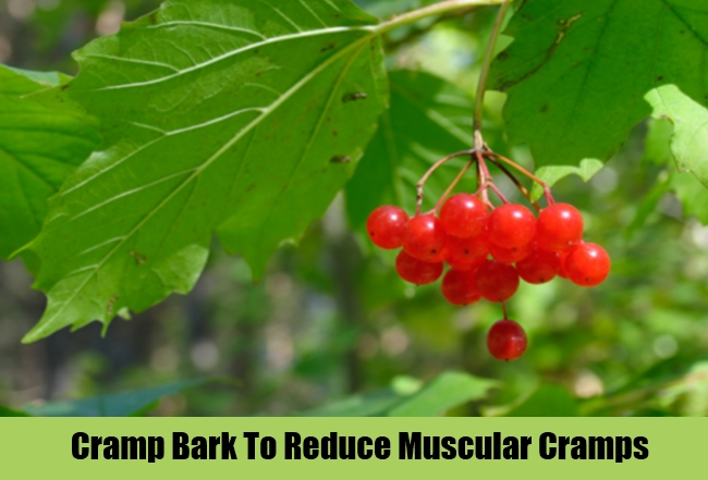 Cramp Bark To Reduce Muscular Cramps
