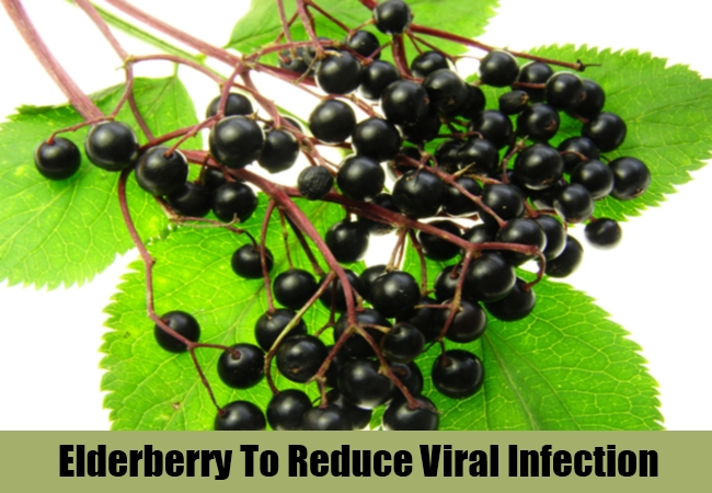 Elderberry To Reduce Viral Infection