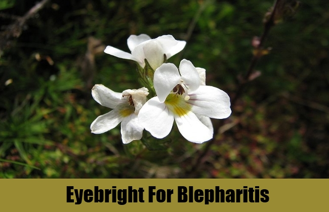 Eyebright For Blepharitis