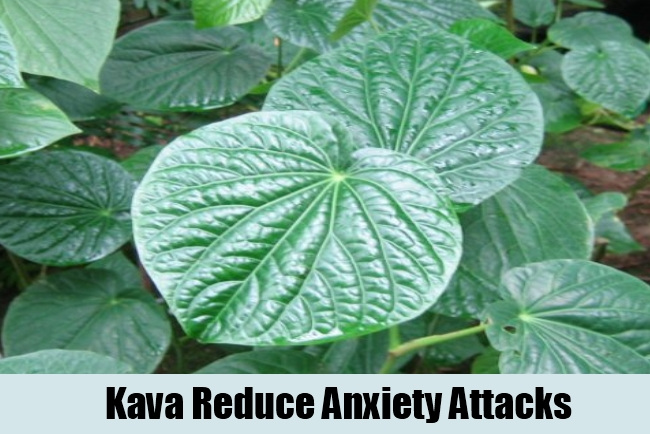 Kava Reduce Anxiety Attacks
