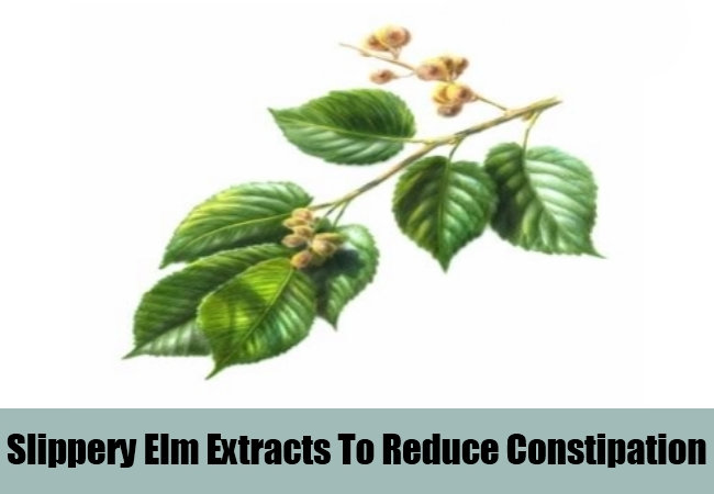 Slippery Elm Extracts To Reduce Constipation