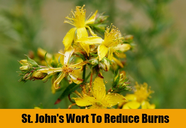 St. John's Wort To Reduce Burns