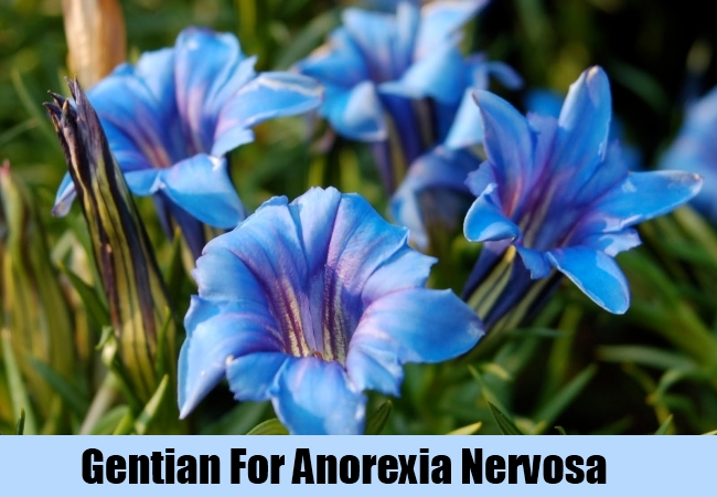 Gentian For Anorexia Nervosa