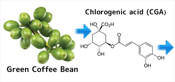 Does green coffee bean extract raise blood sugar image 5