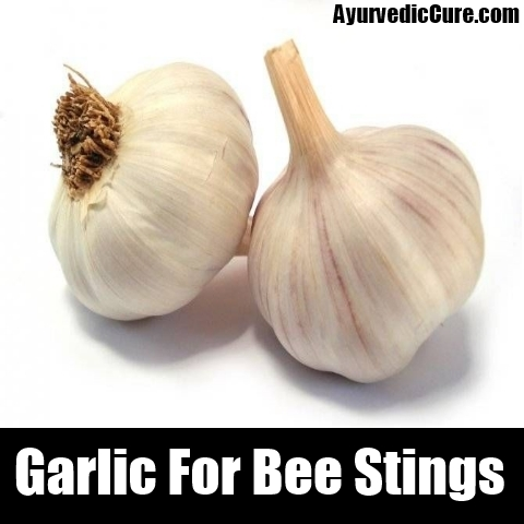 garlic For Bee Stings