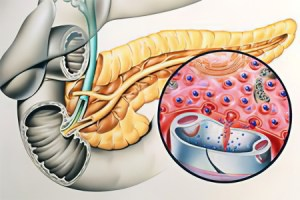 Functions of the digestive enzymes of the pancreas