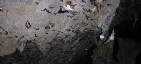Gelukkig waren dit geen vampier vleermuizen. Lanquín