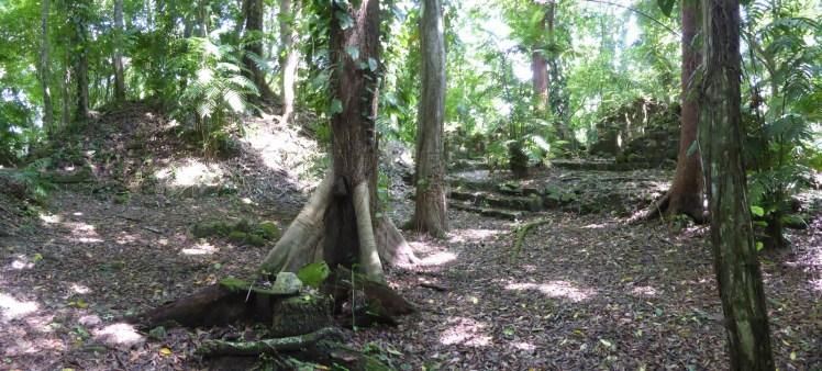 Muggen veroveren oude Maya stad... El Ceibal