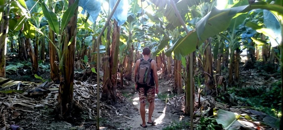 Wandelen door de Del Monte bananen plantage. Quiriguá