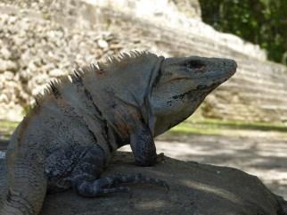 De Doutzen Kroes onder de Leguanen. Xunantunich