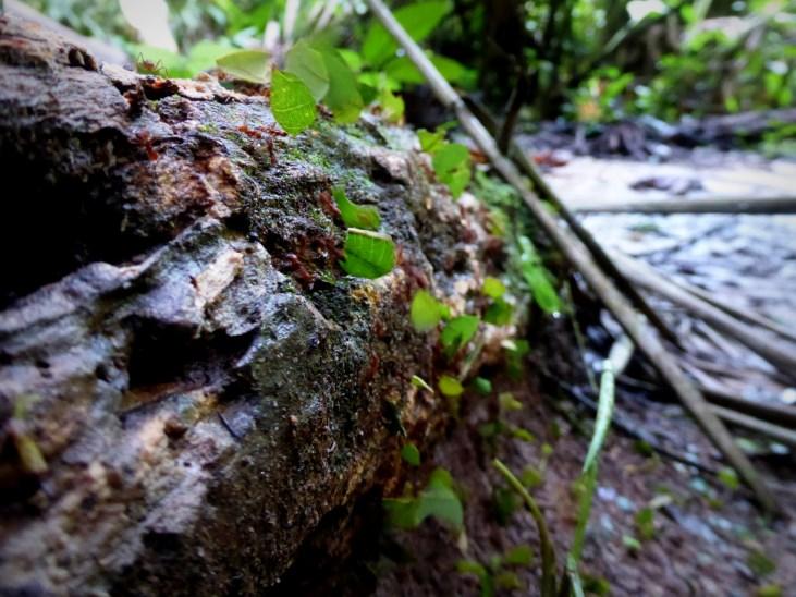 Bezige bijtjes die mieren! Mayflower Bocawina NP