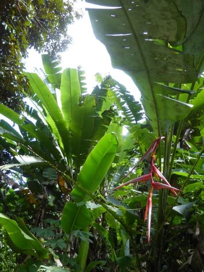 Jungle vegetatie. Mayflower Bocawina NP