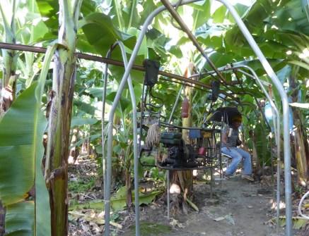 De bananentrein. Quiriguá