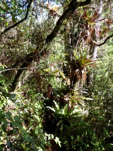 Zoek Elske op het 'overduidelijke' pad in Parque Nacional Montaña de Celaque.