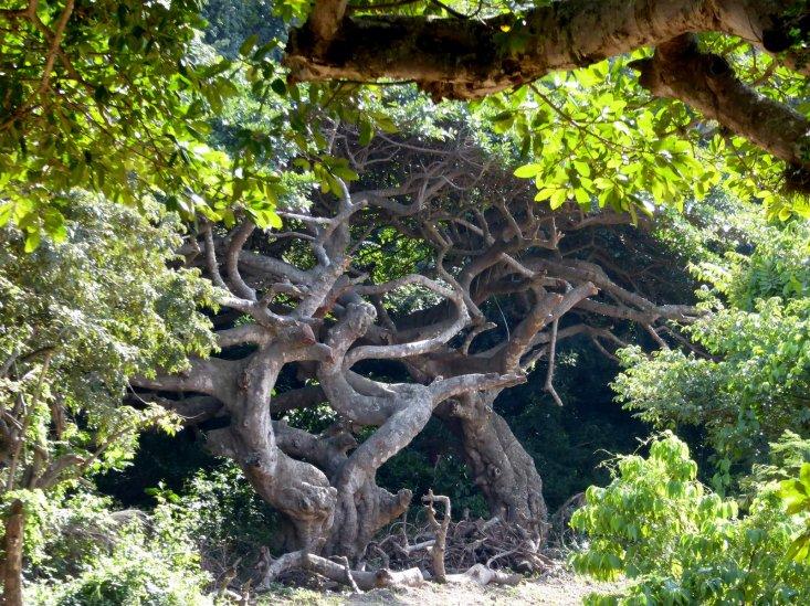 Slangeboom.