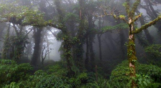 Nog meer bomen. Vulkaan Maderas