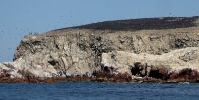Het ziet letterlijk zwart van de vogels! Islas Ballestas