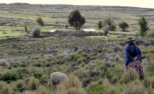 Schapies hoeden doen ze ook Peru. Sullistani