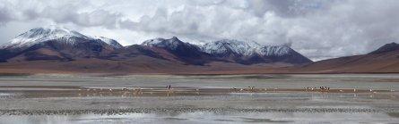 Flamingo's op 5000m+... Nou moe! Zuid Bolivia road trip