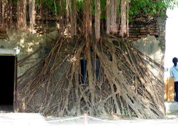 De bomen hebben het Nederlandse pakhuis overgenomen. Tainan